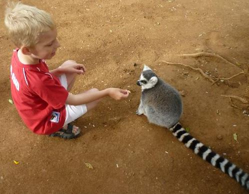 Boy Feeding a Lemar