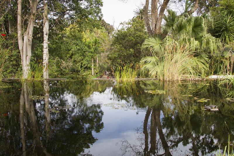 Puerto de la cruz north tenerife canary islands spain resort information and guide - Botanical garden puerto de la cruz ...